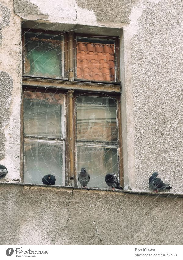 pigeons Lifestyle House (Residential Structure) Environment Detached house Manmade structures Building Architecture Window Animal Pet Bird Pigeon