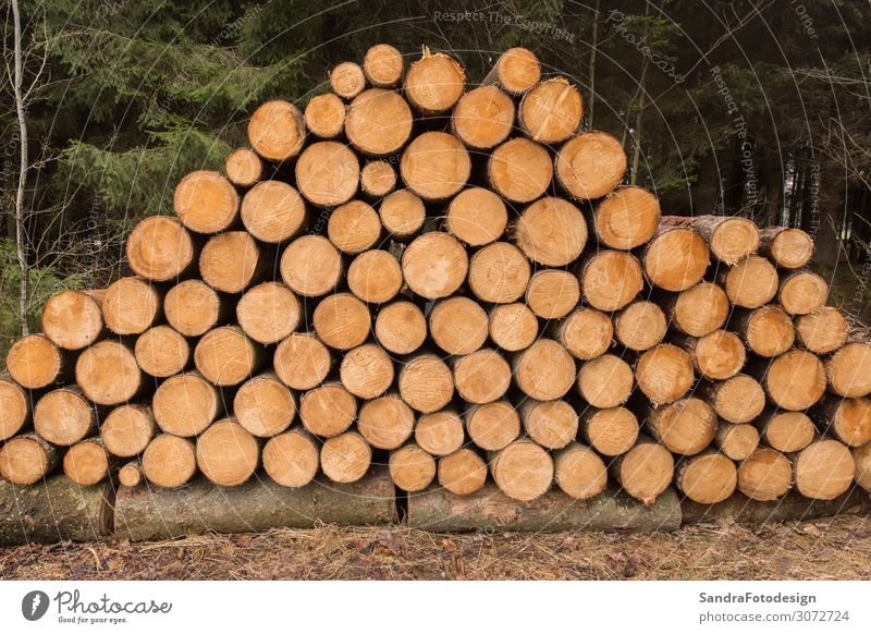 Stacked wooden trunks Beverage Flat (apartment) Nature Climate Tree Forest Contentment natural texture timber stack lumber Material logging firewood pattern