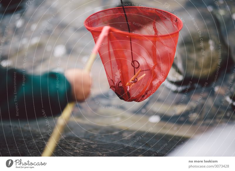 caught by surprise Fishing (Angle) Landing net Coast Lakeside Bay North Sea Baltic Sea Catch To hold on Infancy Nature Sweden Fishing quota Ocean