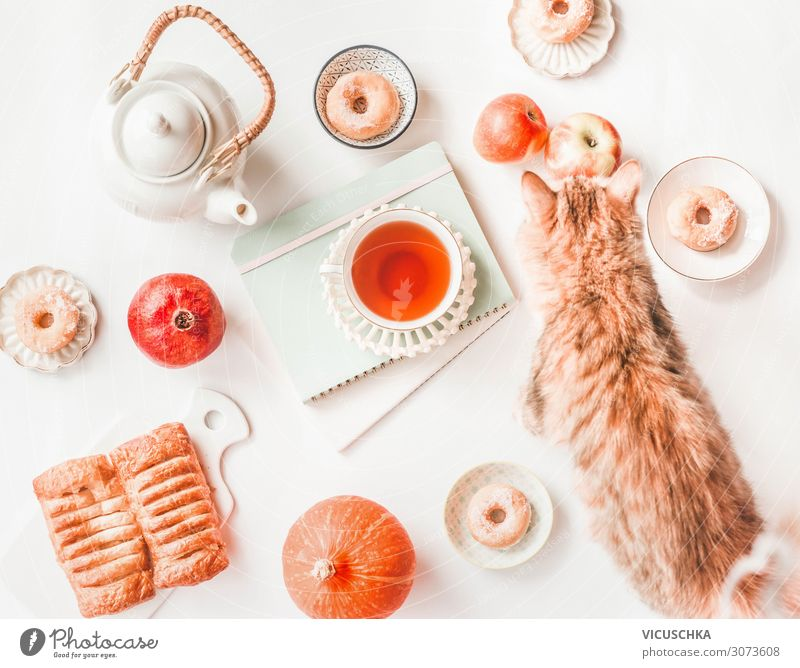 Autumn Still Life with Pumpkin, Cat and Tea Food Cake Nutrition Beverage Hot drink Lifestyle Style Living or residing Animal Design Donut Background picture