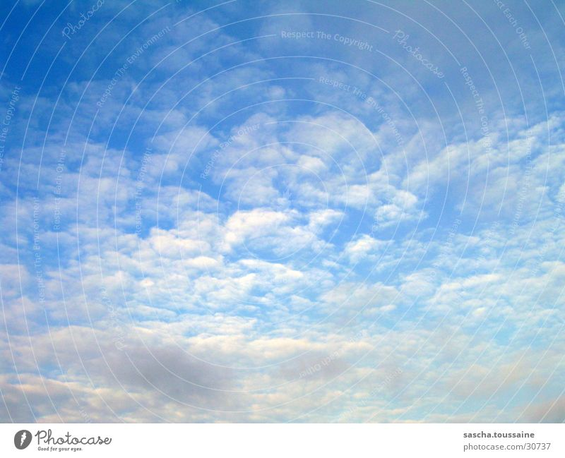 blue flock Blue White Gray Beautiful Sky Nature Weather ...