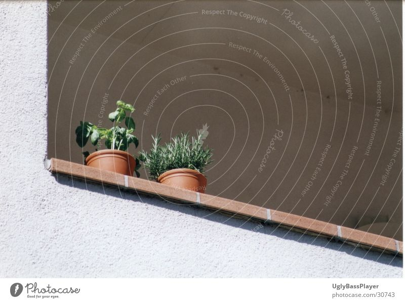 plants Pot Plant Balcony Wall (barrier) Harmonious Living or residing Column