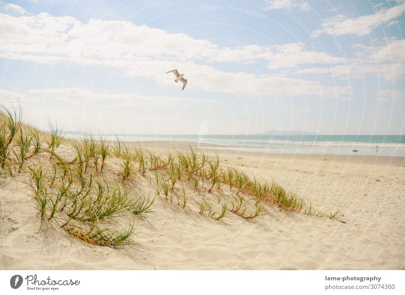 Sandy beach with dune and seagull in sunshine New Zealand Beach Beach dune Seagull Beach vacation bathing weather Ocean Summer vacation Vacation & Travel