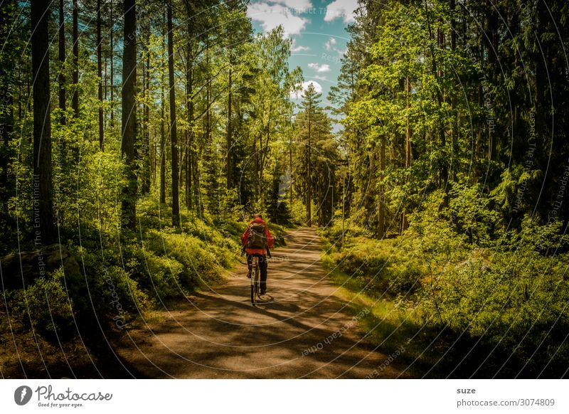 Vacation & Travel Nature Man Summer Plant Green Landscape Calm Forest Healthy Environment Lanes & trails Freedom Trip Adventure Cycling