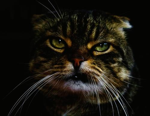 Cat Animal Funny Emotions Moody Power Cute Cool (slang) Might Domestic cat Anger Pet Self-confident Facial expression Animal face Frustration