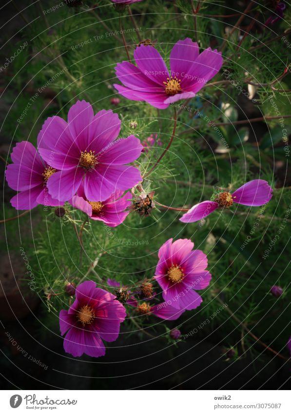 Nature Summer Plant Beautiful Landscape Flower Environment Blossom Meadow Garden Together Illuminate Growth Idyll Joie de vivre (Vitality) Bushes