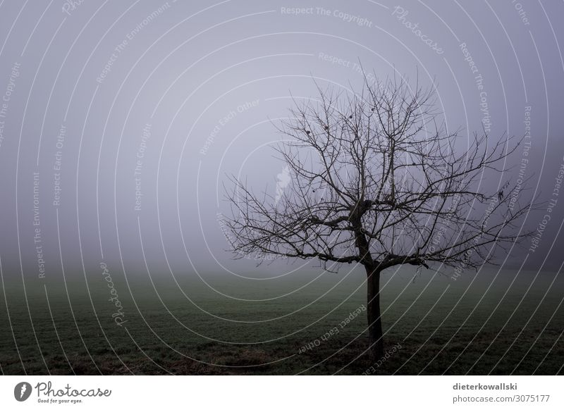 Tree in the fog Environment Nature Plant Autumn Winter Bad weather Fog Sadness Creepy Cold Dream Fear Frustration Transience Comfortless Gray Eerie Colour photo