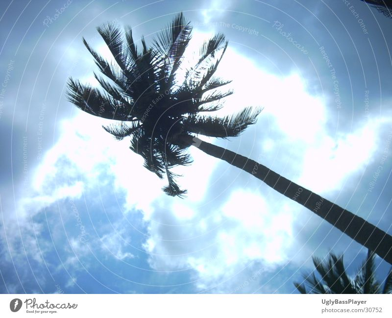 palm Palm tree Clouds Thailand Light Sun Shadow Contrast