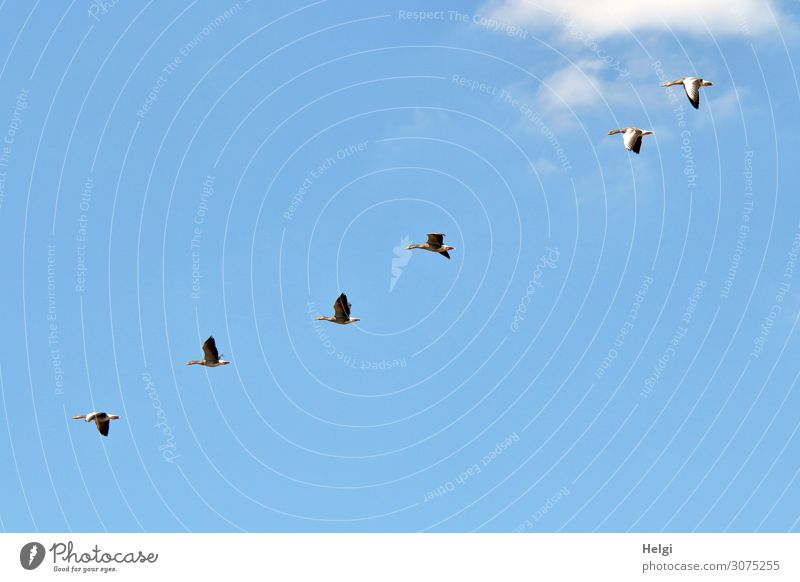 Sky Nature Summer Blue White Clouds Animal Life Environment Natural Movement Freedom Bird Gray Flying Arrangement