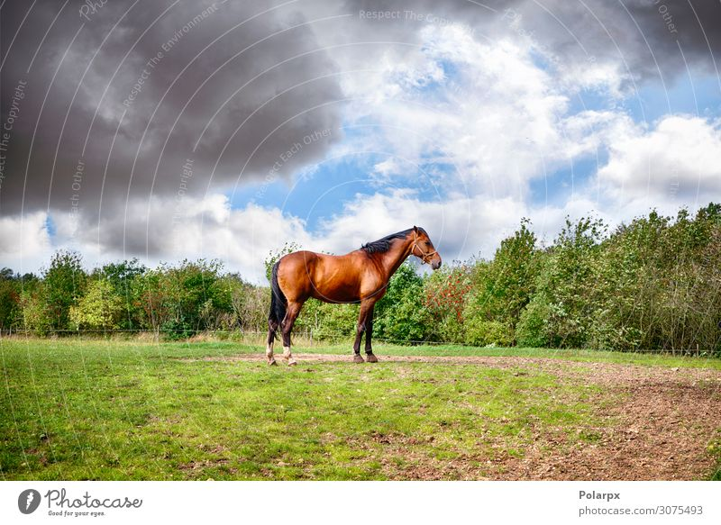 Brown horse standing on a green field Beautiful Summer Industry Group Nature Landscape Animal Sky Clouds Horizon Tree Grass Meadow Horse To feed Stand Bright