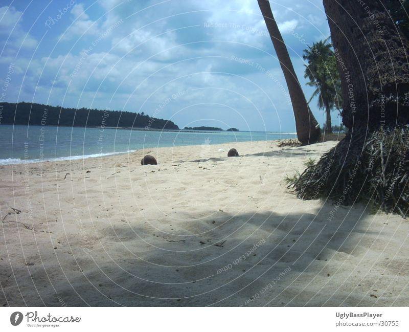 beach Beach Palm tree Coconut Ocean Clouds Sand Water Blue Shadow