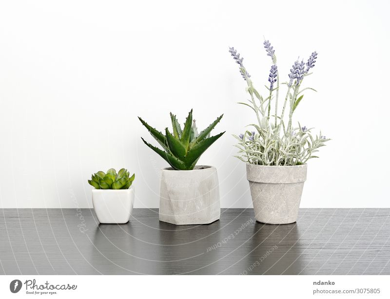 three ceramic pots with plants on a black table Elegant Style House (Residential Structure) Decoration Table Office Nature Plant Flower Leaf Blossom Wood Growth