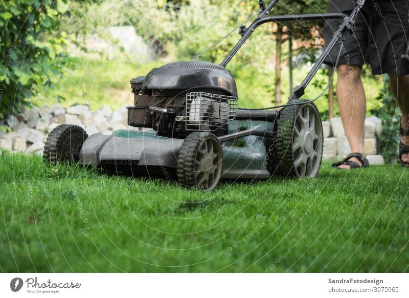 The lawn is mown with the lawn mower Leisure and hobbies Summer Garden Profession Gardening Closing time Human being Masculine Man Adults 1 Nature Earth