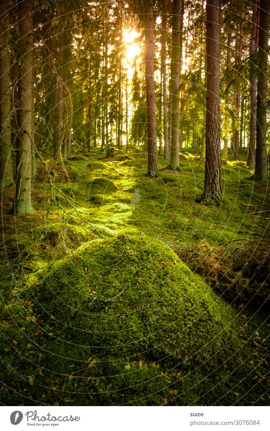 Vacation & Travel Nature Summer Plant Green Landscape Calm Forest Healthy Environment Freedom Trip Hiking Adventure Climate Hill