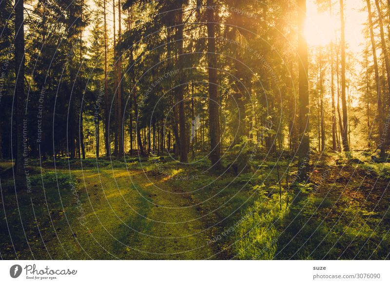 forest light Healthy Alternative medicine Well-being Calm Vacation & Travel Trip Adventure Freedom Hiking Environment Nature Landscape Plant Climate Bushes