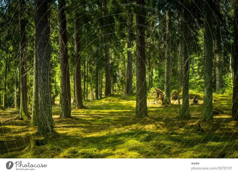 Vacation & Travel Nature Summer Plant Green Landscape Calm Forest Healthy Environment Freedom Trip Hiking Adventure Climate Wellness