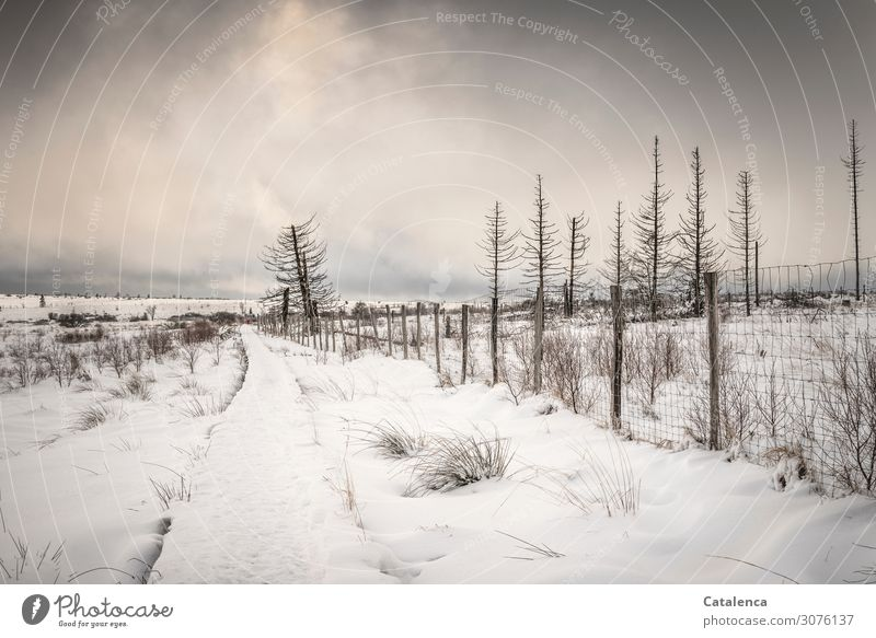 Ice Age | Rarity value Winter Snow Hiking Environment Landscape Sky Clouds Horizon Climate Climate change Bad weather Frost Plant Tree Bushes Wild plant Spruce