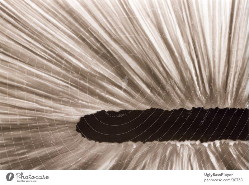 White Black Dark Bright Photographic technology