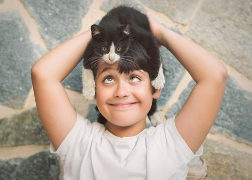 Happy child playing with kitten Lifestyle Joy Playing Human being Masculine Toddler Boy (child) Friendship Infancy 8 - 13 years Child Animal Pet Cat Fitness