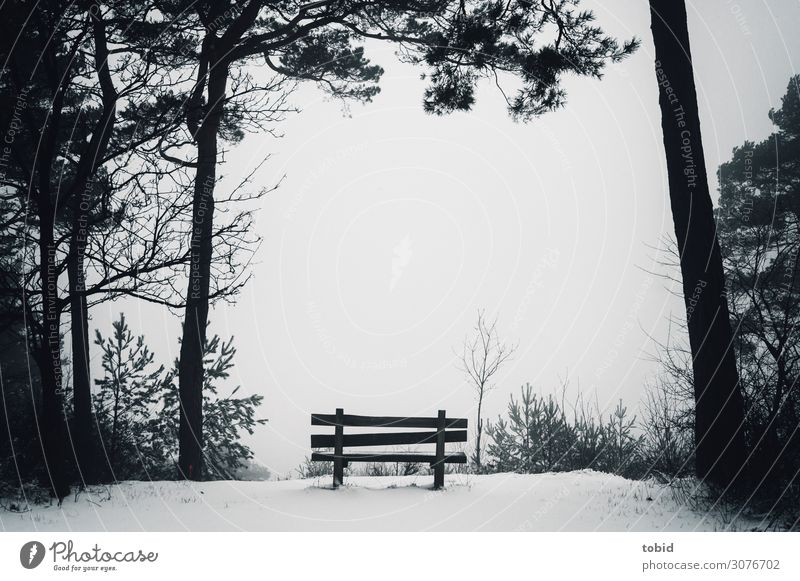 Nature Landscape Tree Loneliness Forest Winter Far-off places Dark Snow Horizon Fog Weather Idyll Bushes Infinity Bench