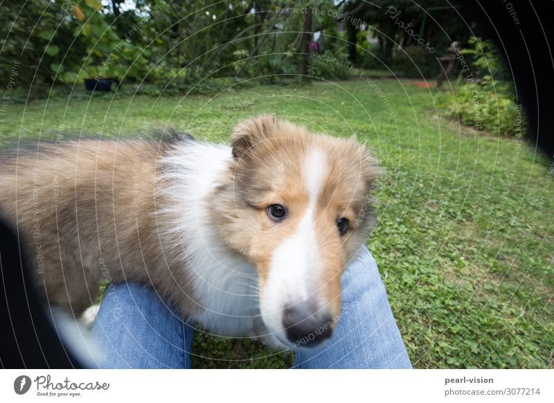 my little friend Animal Pet Dog Animal face Collie 1 Looking Cute Colour photo Exterior shot Day Animal portrait Looking into the camera