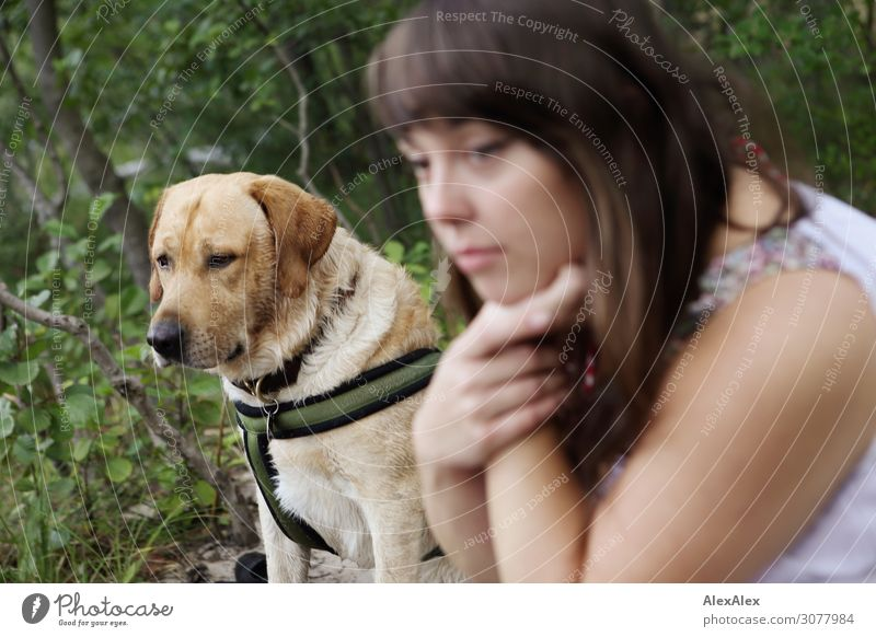 Labrador with young woman in the forest Style Beautiful Harmonious Young woman Youth (Young adults) 18 - 30 years Adults Nature Summer Beautiful weather Forest