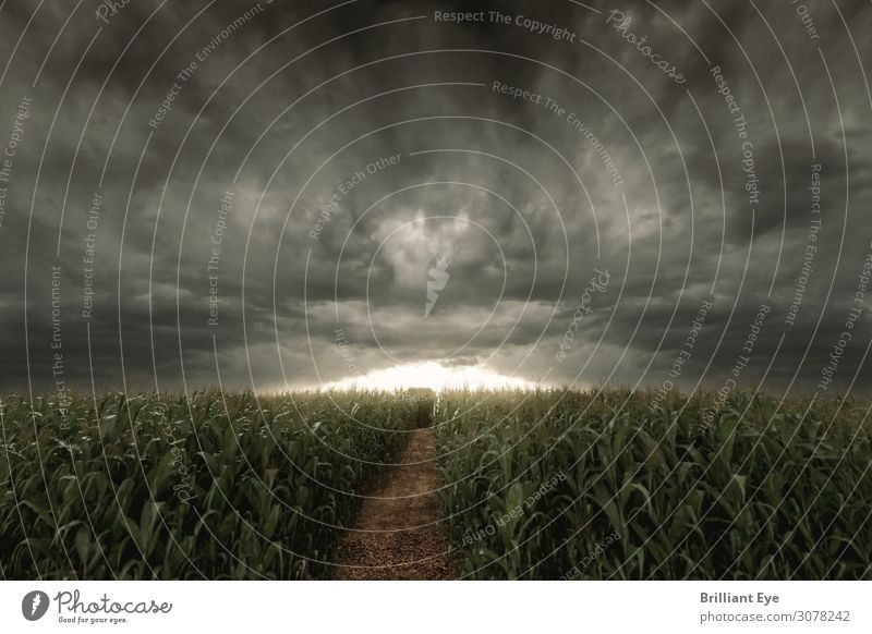 doom mood Nature Horizon Sunrise Sunset Summer Climate Bad weather Storm Wind Gale Agricultural crop Field Cornfield Creepy Lanes & trails Agriculture Clouds