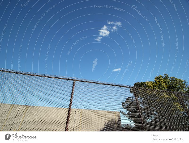 paw cloud Sky Clouds Autumn Beautiful weather Tree New York City Manmade structures Building Fence Tall Safety Protection Warm-heartedness Watchfulness