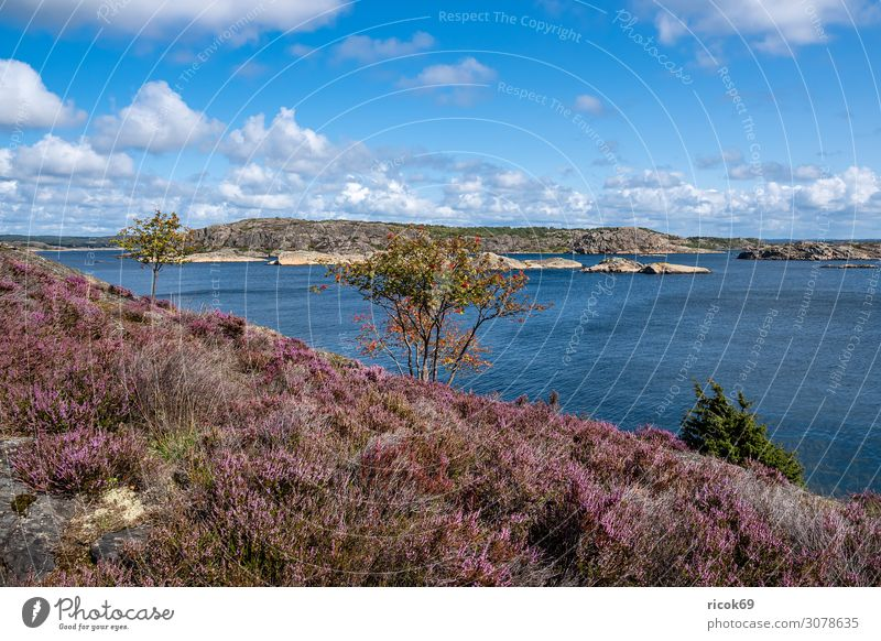 View of the island Dyrön in Sweden Relaxation Vacation & Travel Tourism Summer Ocean Island Nature Landscape Water Clouds Tree Bushes Rock Coast North Sea