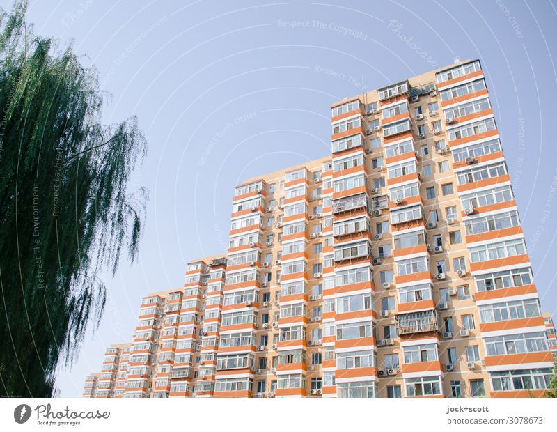 better living +green Far-off places Cloudless sky Tree Beijing Downtown High-rise Architecture Town house (City: Block of flats) Tower block Facade Authentic