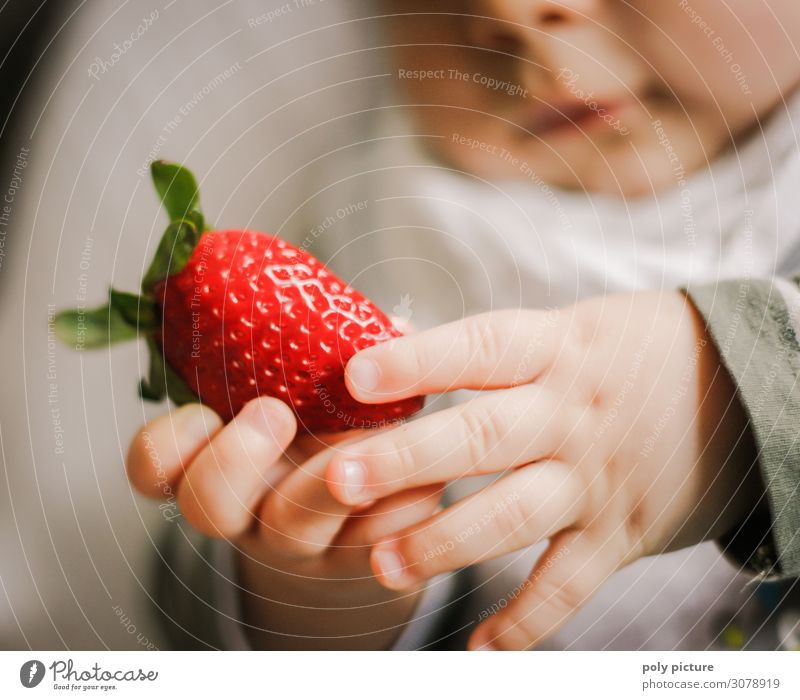 Baby hands hold red strawberry Shallow depth of field Blur Light Copy Space bottom Copy Space top Interior shot Multicoloured Colour photo Spring Climate change