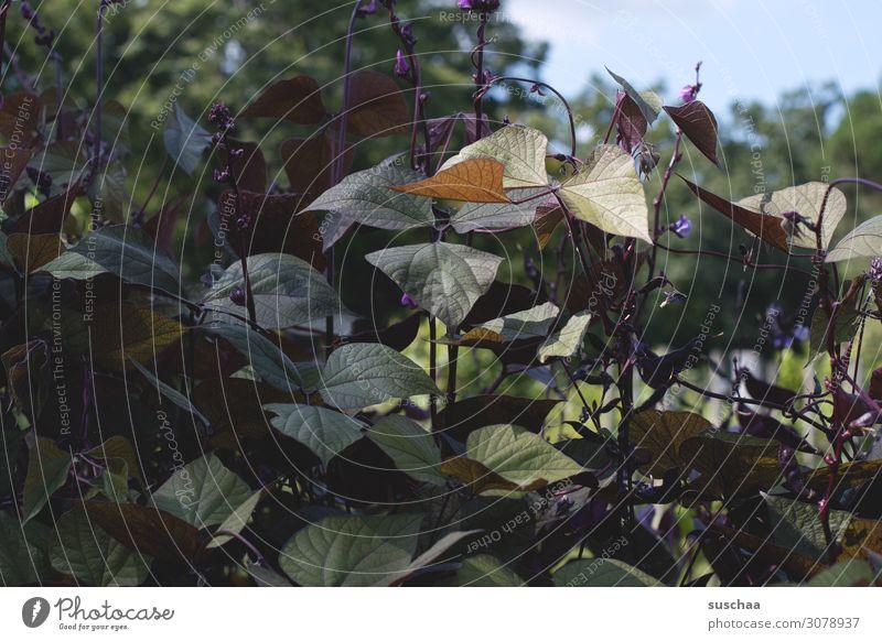 press Print media Leaf Nature Plant Botany Botanical gardens Exotic Green Violet Dark Exceptional Strange colourfulness
