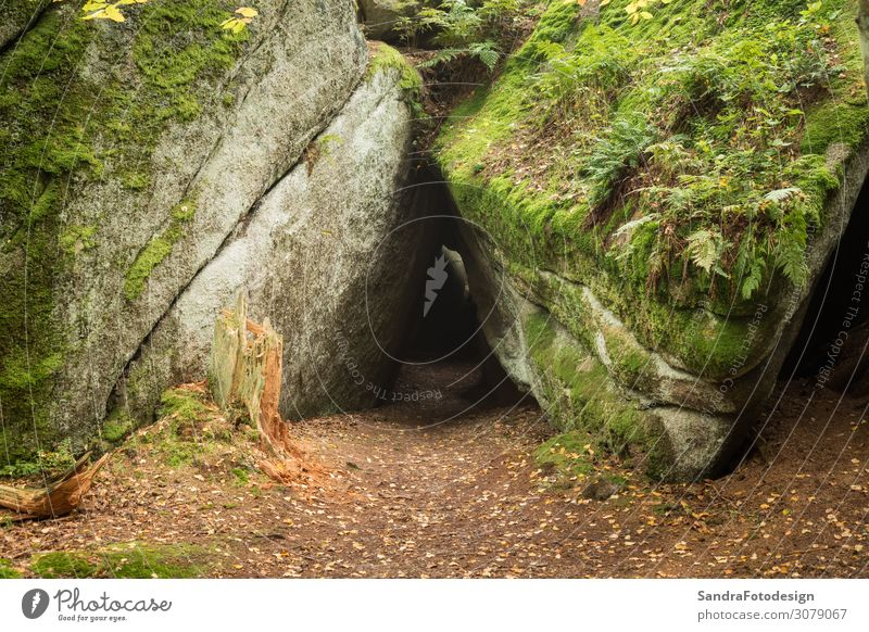 Huge rocks in the forest Leisure and hobbies Vacation & Travel Hiking Nature Landscape Park Forest Discover Relaxation Walking Calm luisenburg Labyrinth granite