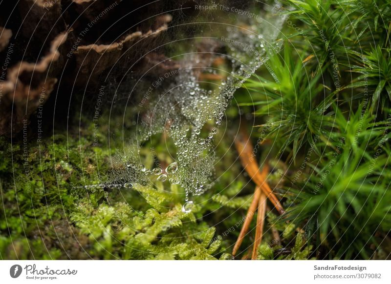 Spider web in the forest with rain drops Garden Nature Landscape Park Forest Virgin forest Discover Crawl spider nice water trap beautiful beauty abstract