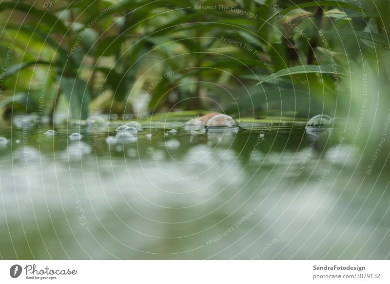 Water bubbles on a small pond Swimming pool Summer Nature Plant Park Observe Cool (slang) Wet Green Pure river environment texture color fresh clean bright deep