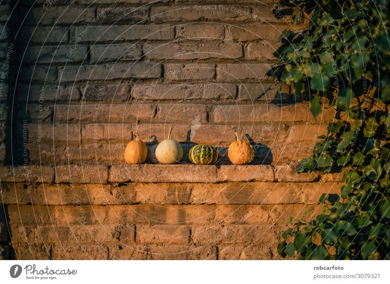 pumpkins ideal for halloween Vegetable Garden Decoration Thanksgiving Hallowe'en Autumn Wood Natural Yellow Green Colour Tradition Pumpkin orange food Harvest