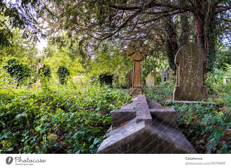 All Souls' Day Nature Landscape Plant Summer Beautiful weather Tree Grass Bushes Ivy Leaf Wild plant Yew Park Crypt Tomb Tombstone Cemetery Celtic cross