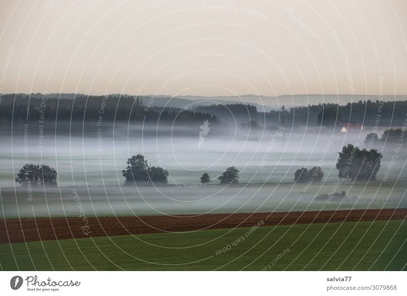 Nebulous ground fog. Environment Nature Air Water Sky Cloudless sky Summer Climate Fog Tree Bushes Meadow Field Forest Calm Moody Morning fog Dawn Ground fog