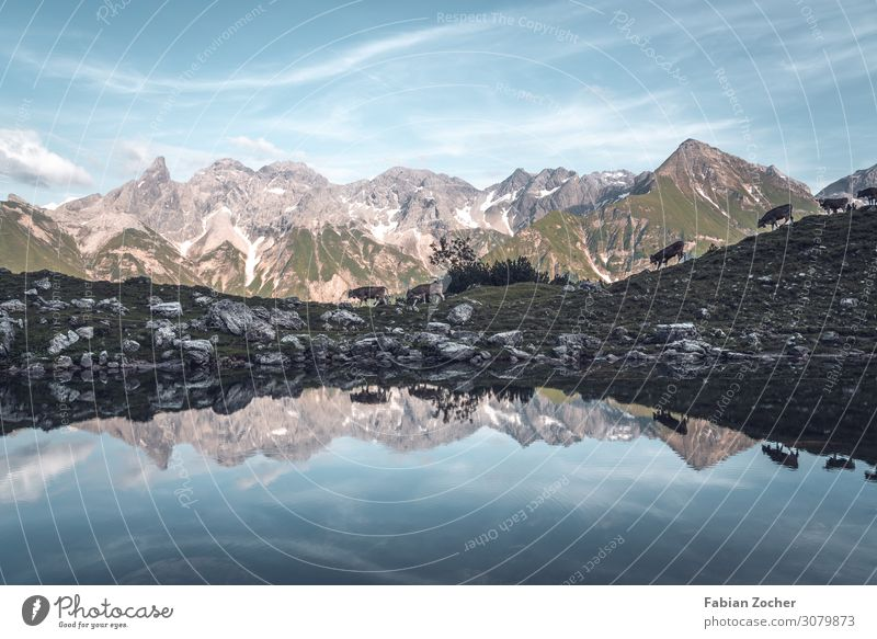 Hike to Lake Guggersee in the Allgäu Alps Mountain Nature Landscape Water Sky Summer Peak Lakeside Farm animal Cow Cattle Herd Walking Hiking Blue Power