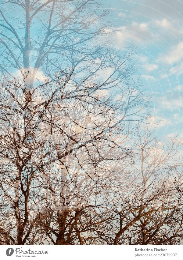 Autumn Winter Double Exposure Environment Nature Landscape Sky Clouds Climate Weather Beautiful weather Tree Park Forest Bright Blue Brown Turquoise White
