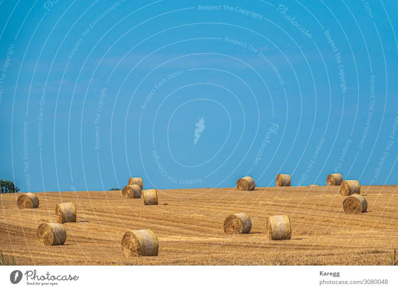 yellow straw bales on field Summer Environment Nature Earth Sky Cloudless sky Autumn Agricultural crop Field Dry Blue Yellow countryside wheat landscape golden