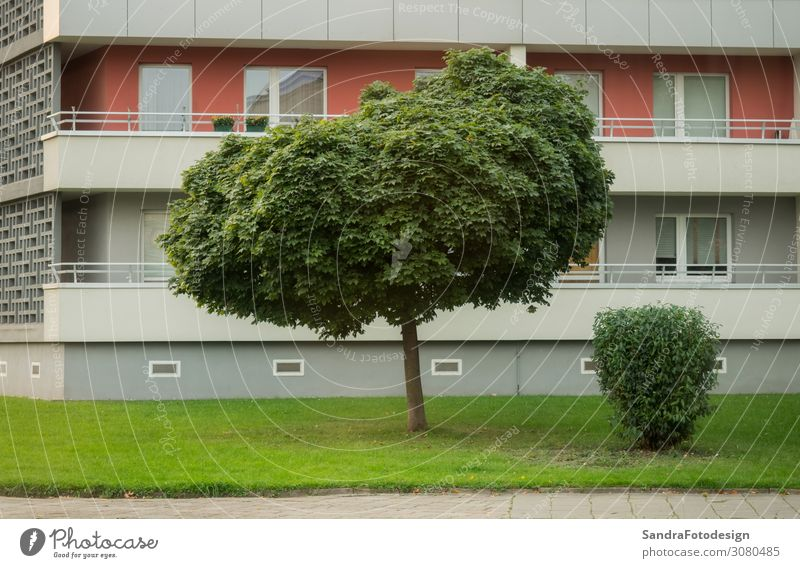 Lawn and tree in front of a high rise in the city Flat (apartment) Business Park Town House (Residential Structure) High-rise Wall (barrier) Wall (building)