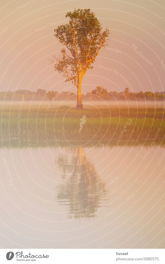 tree in yellow water , billabong Vacation & Travel Nature Plant Beautiful Green Landscape Sun Tree Animal Calm Joy Life Yellow Spring Tourism Bird