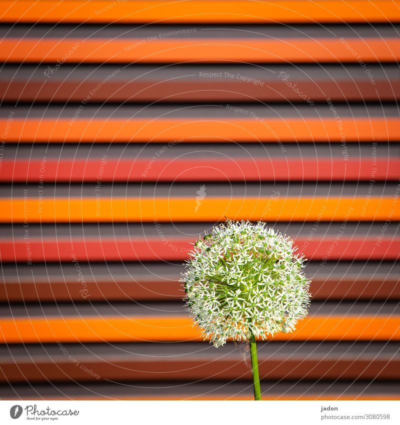 HAPPY BIRTHDAY PHOTOCASE! Red Round lines Flower Plant Square Direct Abstract Deserted Yellow Multicoloured Pattern Structures and shapes Graphic Orange