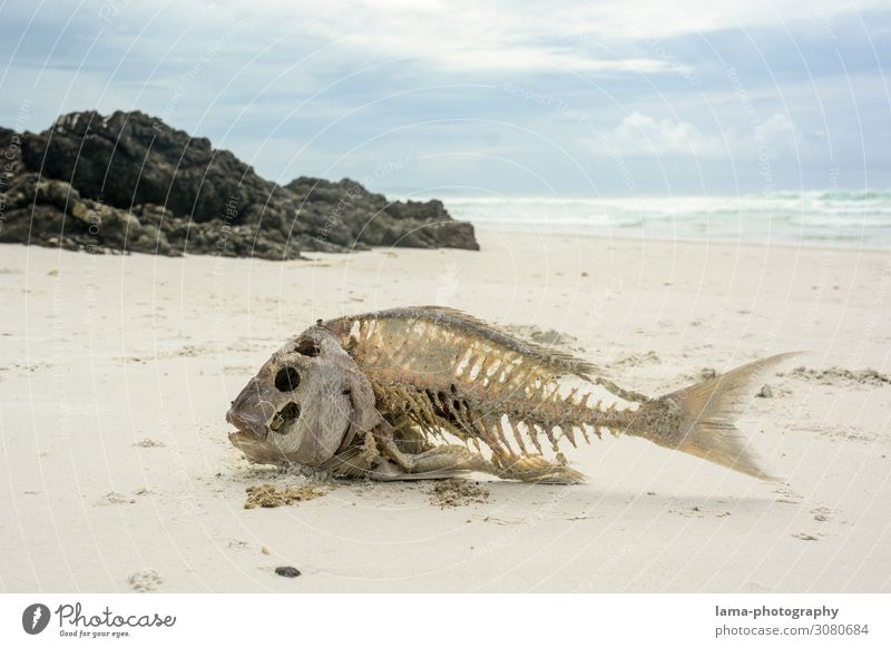 Hard (tide) times New Zealand Beach Sand Sandy beach sunshine Ocean Vacation & Travel Nature Beautiful weather Tourism Fish Skeleton Starve Drought Death