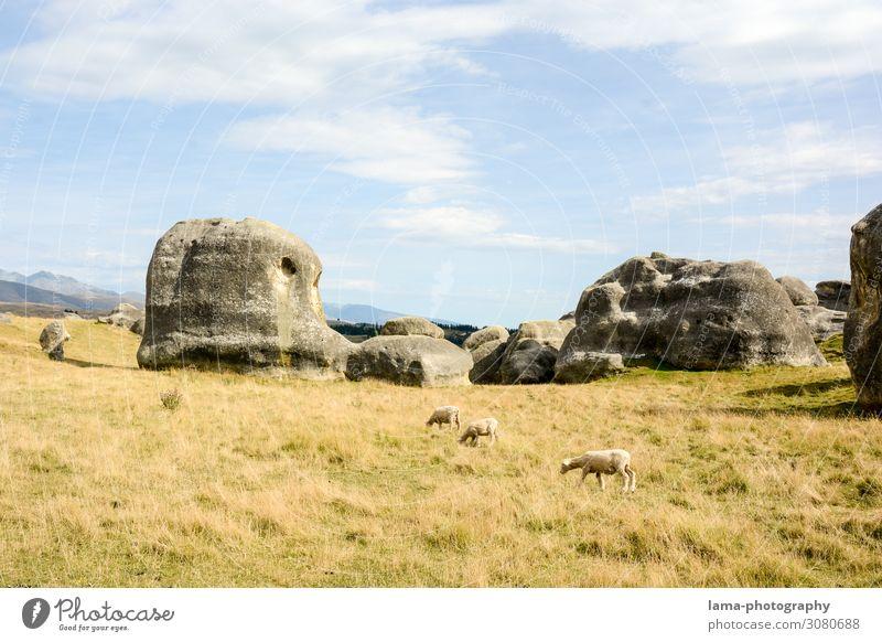 Vacation & Travel Nature Landscape Grass Tourism Rock Trip Wild Adventure Tourist Attraction Hill Sheep Elephant Farm animal Flock New Zealand