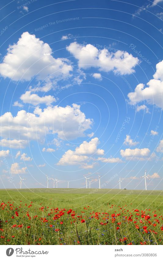 field study Energy industry Renewable energy Wind energy plant Nature Plant Sky Clouds Spring Summer Beautiful weather Grass Blossom Foliage plant