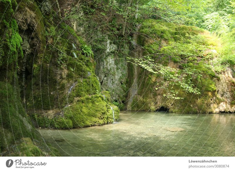 Nature Summer Plant Green Water Landscape Tree Relaxation Calm Forest Life Natural Brown Hiking Fresh Idyll