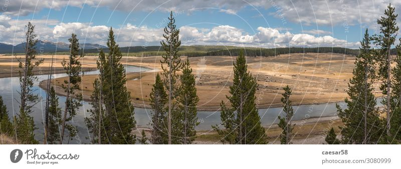 Panorama of the Yellowstone River Nature Landscape Plant Animal Summer Autumn Tree Field Forest Hill Brook Yellowstone Nationalparc Bison Buffalo
