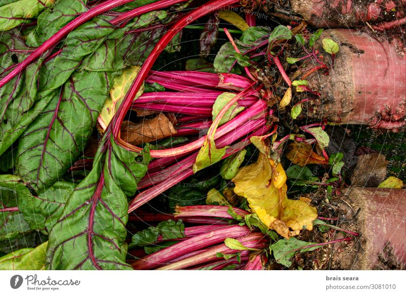 Beets Nature Healthy Eating Plant Green Red Leaf Food Lifestyle Environment Natural Garden Nutrition Fresh